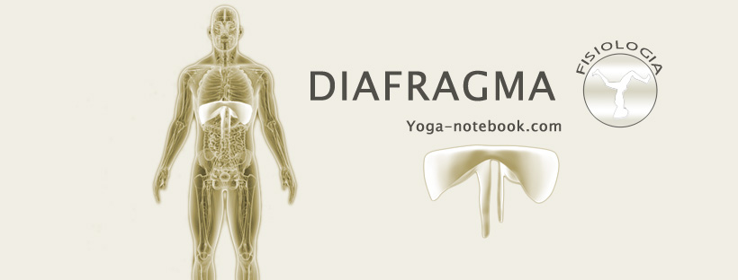 Anatomia – Yoga Notebook